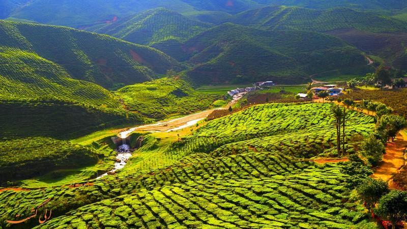بهترین مسیرهای طبیعت گردی در ارتفاعات کامرون مالزی