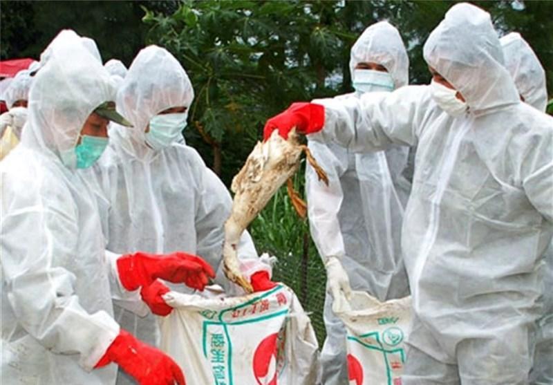 دومین مورد ابتلا به ویروس جدید آنفلوانزای مرغی در شرق چین