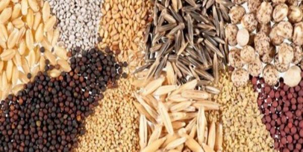خبرنگاران مسئله ای در تامین بذر محصولات زراعی زمستانه در گراش وجود ندارد
