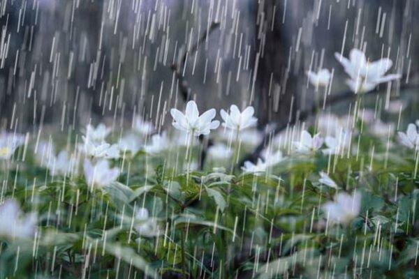 طرح استحصال آب باران از سطوح آبگیر اجرا شد
