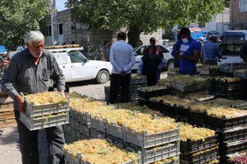 طراح خانه ویلایی: 60 هکتار از باغات استان مرکزی سایه نشین می شوند