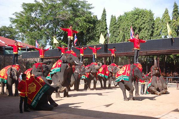 تاریخچه دهکده فیل های پاتایا